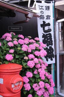 花の写真・画像素材[576020]