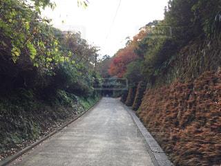 道の端に木のパスの写真・画像素材[875055]