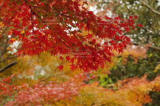近くの木のアップの写真・画像素材[875062]