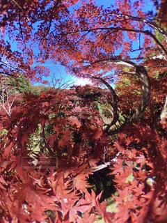 近くの木のアップの写真・画像素材[875082]