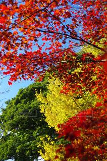 近くの木のアップの写真・画像素材[878519]