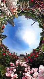 YOKOHAMA Flower gardenの写真・画像素材[1127575]