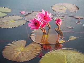 カラフルな花のグループの写真・画像素材[3346830]