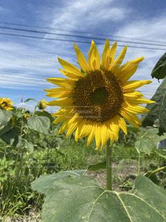 花のクローズアップの写真・画像素材[3492851]