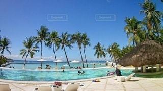 ヤシの木と水のプールがあるビーチの写真・画像素材[3555818]