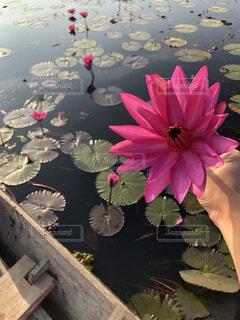 自然,花,湖,ボート,水面,池,手持ち,人物,蓮,旅行,タイ,ポートレート,海外旅行,睡蓮,クルーズ,ライフスタイル,手元
