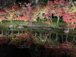 緑豊かな森の上に立つ人々のグループの写真・画像素材[3714910]