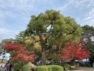 大きな木の写真・画像素材[3714917]