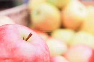 食べ物の写真・画像素材[539908]