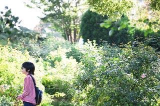 風景 - No.545436