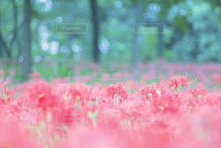 自然の写真・画像素材[550220]