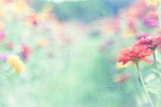 自然の写真・画像素材[550269]