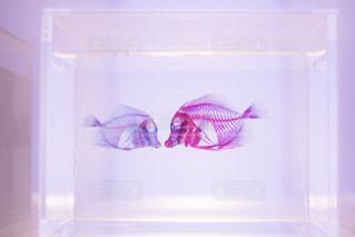 魚 - No.552366