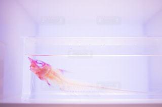 魚 - No.552367