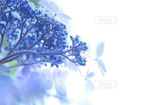 自然の写真・画像素材[559025]
