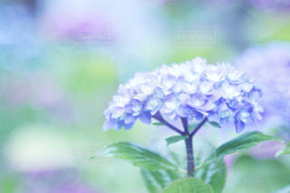 自然の写真・画像素材[559026]