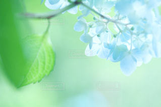 自然の写真・画像素材[559028]