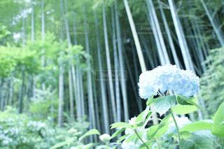 自然の写真・画像素材[559029]