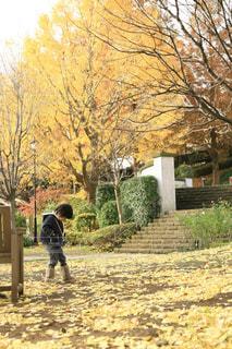風景 - No.600589