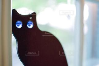 猫,光,キラキラ,顔,窓際,黒猫,目,め,瞳,ビー玉,眼