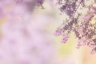 ピンクの世界の写真・画像素材[787374]