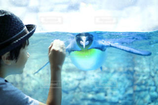 おいでおいでするとペンギンさんがくるよの写真・画像素材[787391]