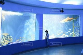 お魚さんと一緒に泳ぎたいなの写真・画像素材[787398]
