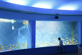 泳ぐお魚さんを見つめての写真・画像素材[787401]