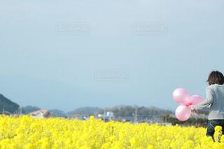 菜の花畑での写真・画像素材[1404143]