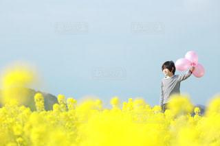 菜の花畑での写真・画像素材[1404151]