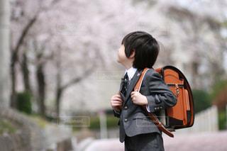 桜満開の中での写真・画像素材[1404169]