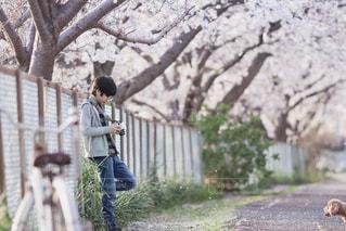 桜並木の下での写真・画像素材[1407333]