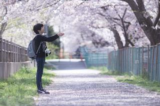 桜舞い散る中での写真・画像素材[1407356]