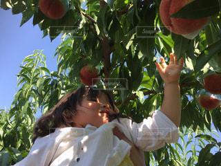 フルーツ,果物,夏休み,レジャー,桃,フルーツ狩り,果物狩り,夏バテ,熱中症,桃狩り,夏のイベント