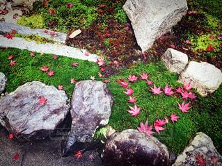 秋の写真・画像素材[526179]