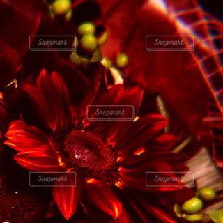 花の写真・画像素材[559894]
