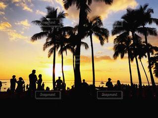 空,夕日,人々,ヤシの木,ハワイ,海沿い,切り絵みたい