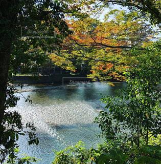 自然,秋,紅葉,川,東京都,秋川渓谷,日帰りハイキング