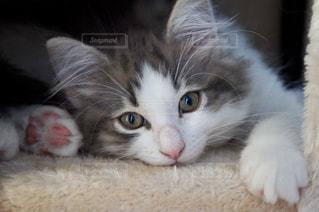 近くに猫のアップの写真・画像素材[1280728]