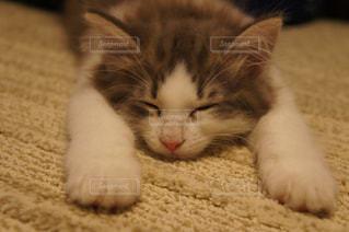 猫,動物,かわいい,ペット,仔猫,人物,ネコ,猫の日,222