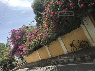 花の写真・画像素材[595951]