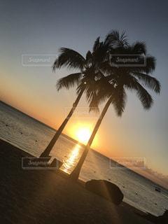 ヤシの木とビーチの写真・画像素材[972222]