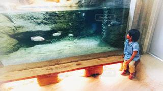 魚,屋内,子供,動物園,休日,息子,水槽,お出かけ