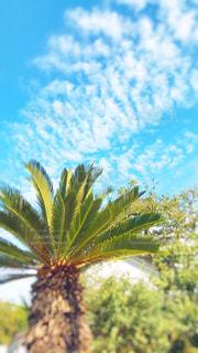 うろこ雲の写真・画像素材[1509466]