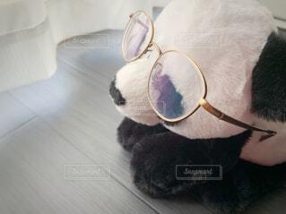 たそがれパンダの写真・画像素材[3772167]