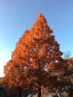 秋空の下の写真・画像素材[1465543]