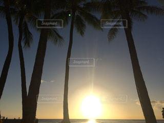 海,夕日,ヤシの木,ハワイ,サンセット,ワイキキビーチ,綺麗な景色