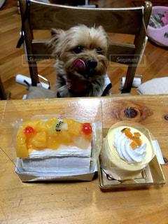 犬,ケーキ,かわいい,癒し,誕生日,ヨークシャーテリア,ヨーキー,誕生日ケーキ,バースデイケーキ