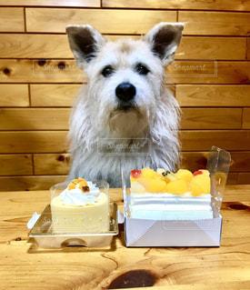 犬,ケーキ,かわいい,いぬ,癒し,誕生日,雑種,ミックス,誕生日ケーキ,雑種犬,バースデイケーキ