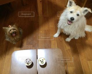 犬,ケーキ,かわいい,いぬ,オシャレ,癒し,誕生日,ヨークシャーテリア,ヨーキー,雑種,ミックス,誕生日ケーキ,雑種犬,バースデイケーキ,2ひき